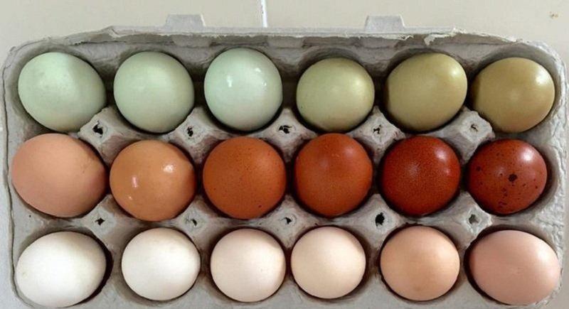 куриные яйца в коробке