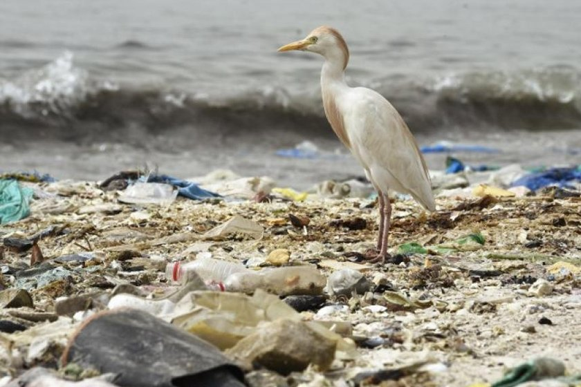почему мелкий пластик опасен