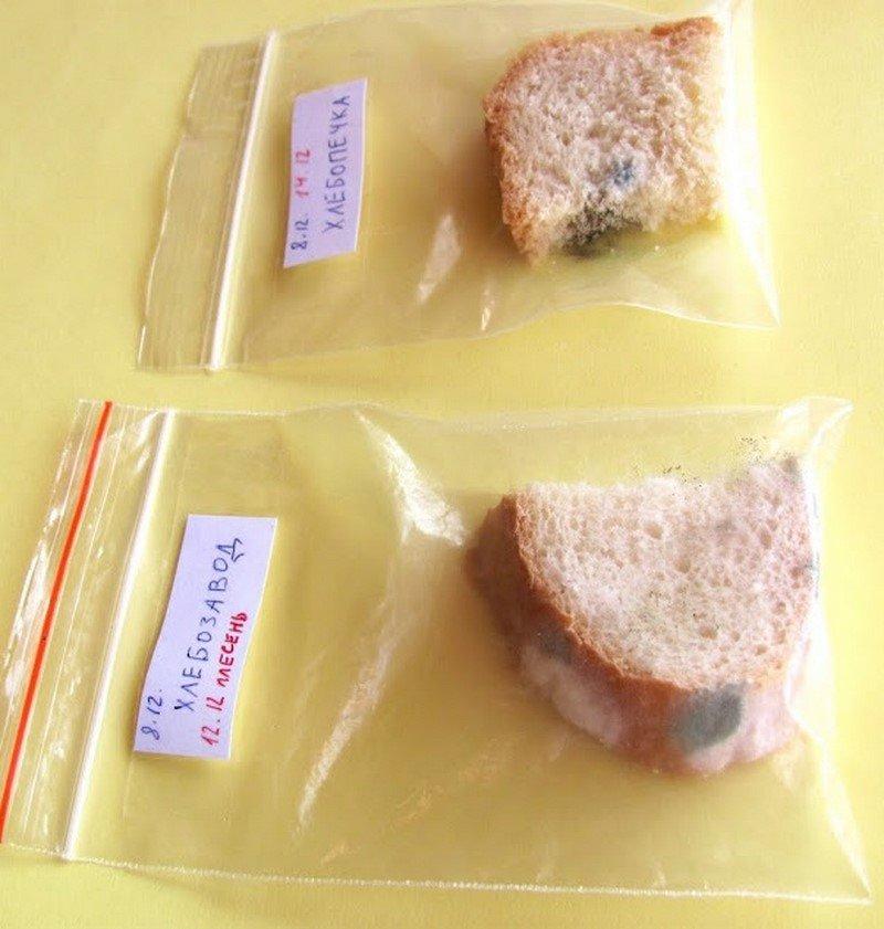 На каком хлебе плесень растет быстрее