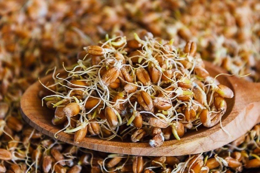 настой пшеницы для похудения