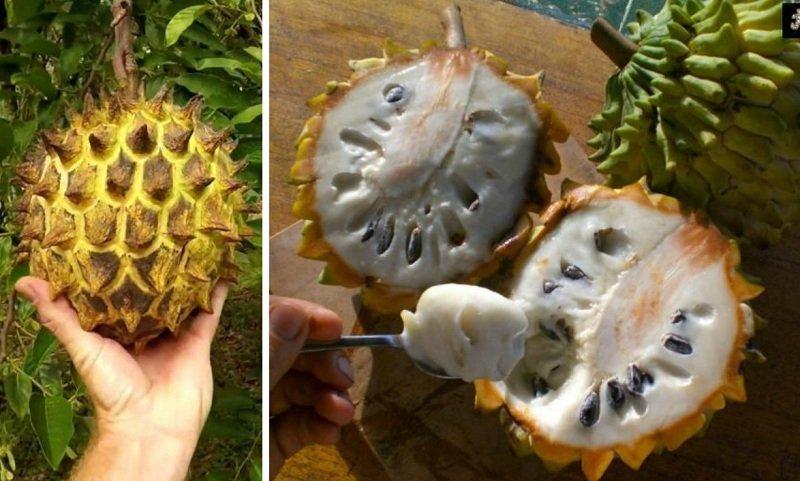 фрукт бириба
