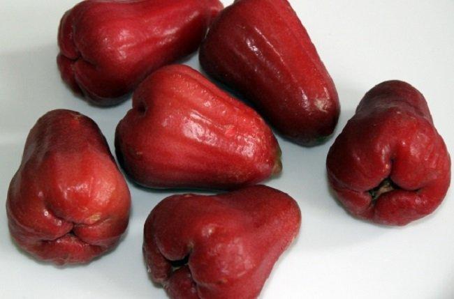Необычные сорта яблок, яванское яблоко