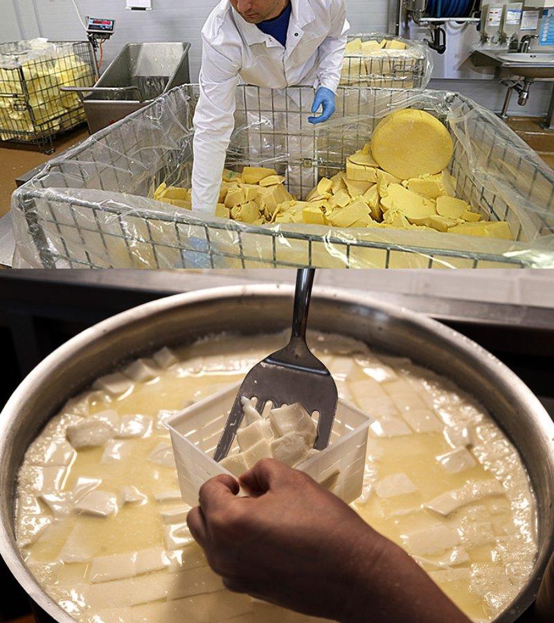 закуска из плавленого сыра