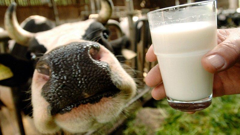 почему евреи не едят мясо с молоком
