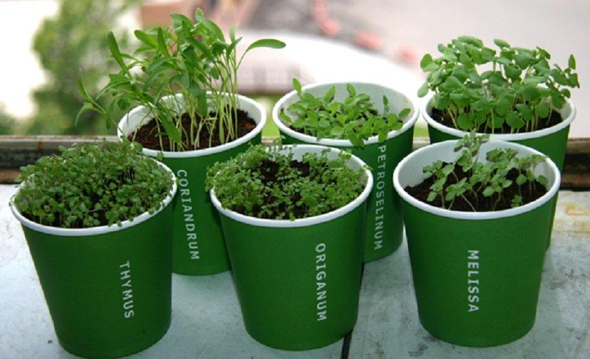 выращивать продукты дома
