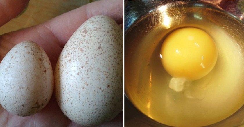 Едят ли индюшиные яйца