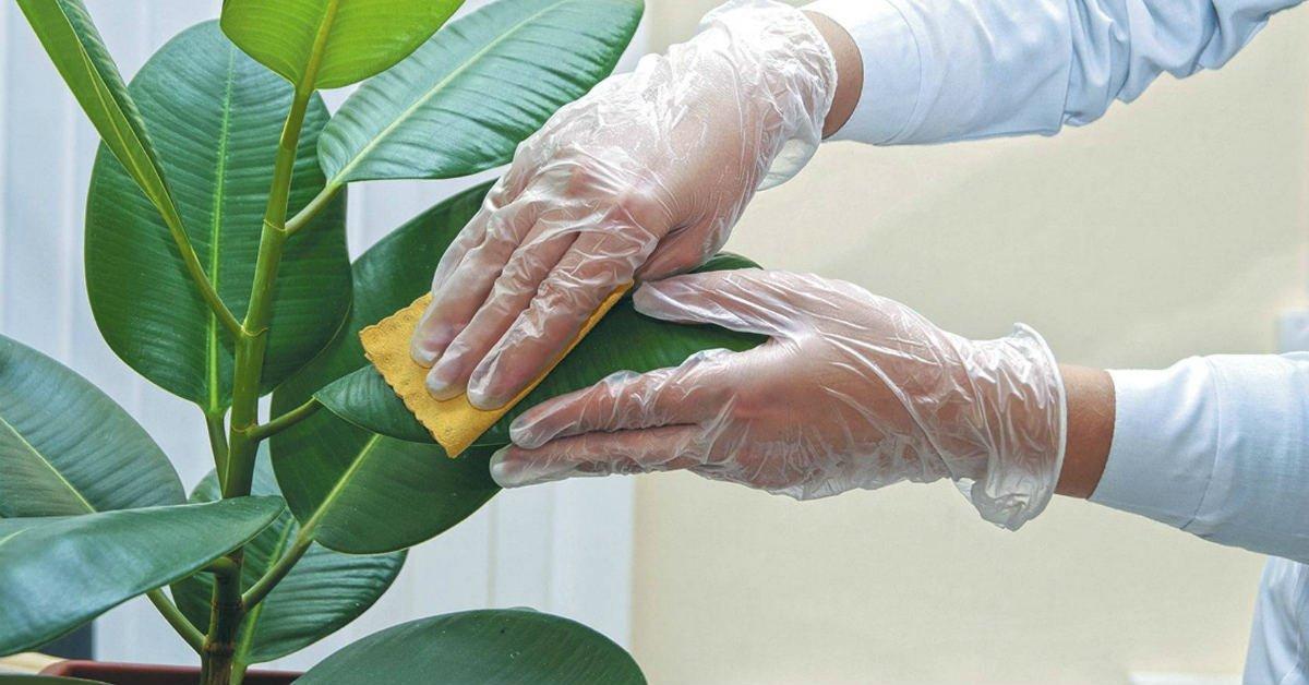 как отполировать листья