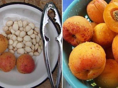 Польза абрикосовых косточек