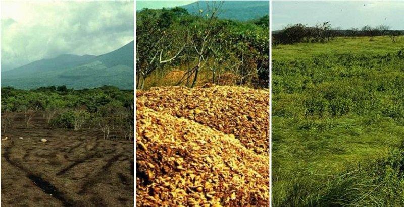восстановление тропического леса корками