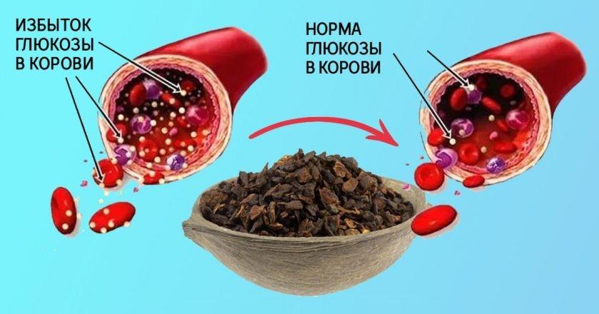 польза цикория для здоровья