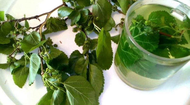 Картинки по запросу Чай из листьев шелковицы