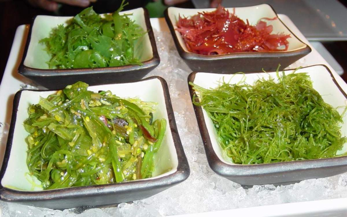 Польза морских водорослей и как их можно использовать