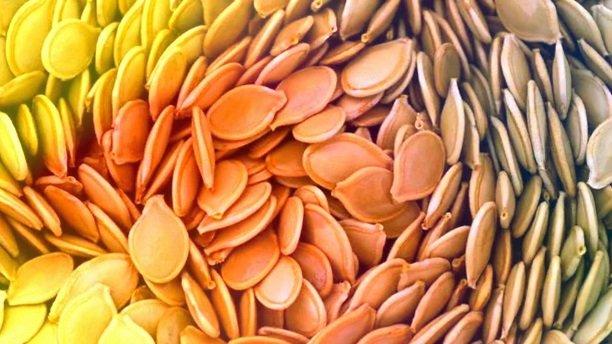 tekvicové semená
