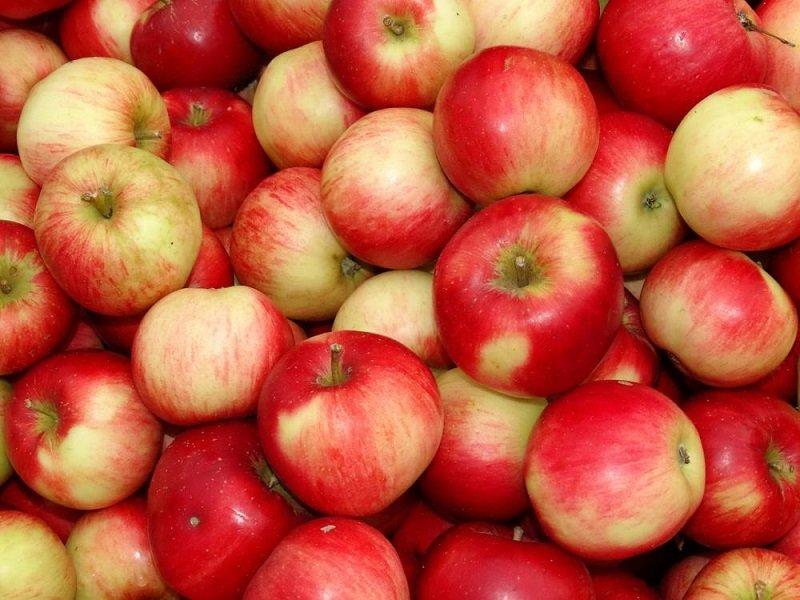 wykorzystanie jabłek