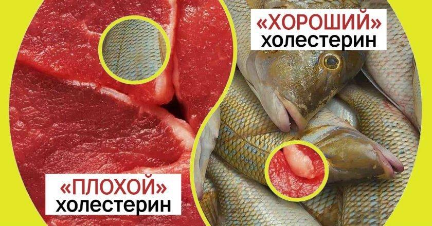 снижение холестерина в крови