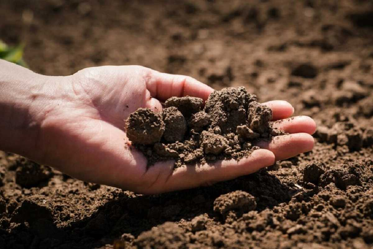 Проблемы почвы и пути их решения