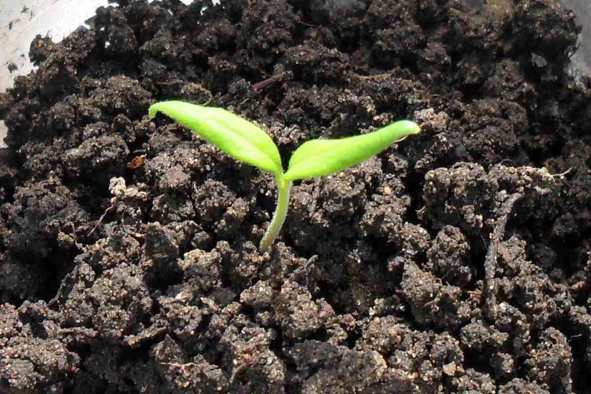 Типичные проблемы с рассадой и пути их решения