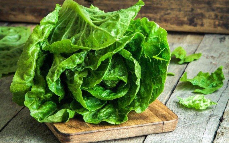 рецепты свежих салатов