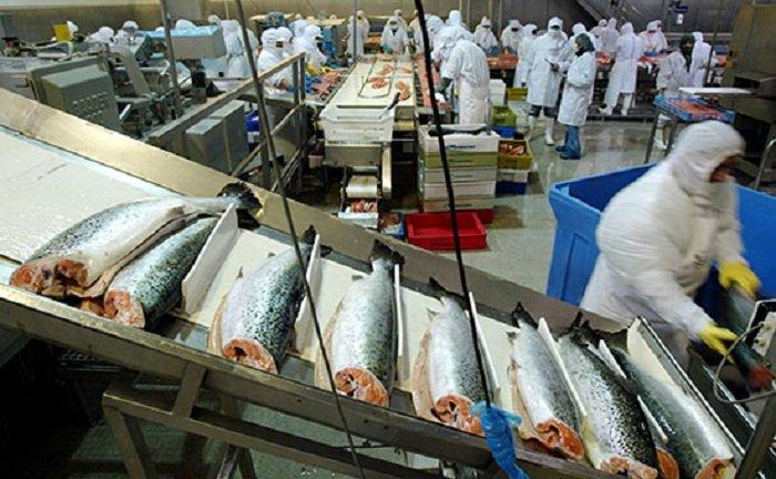 токсичная рыба