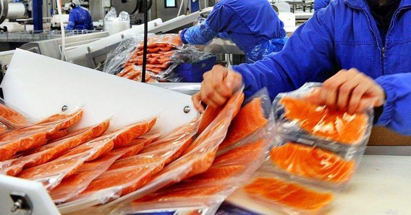производство норвежского лосося