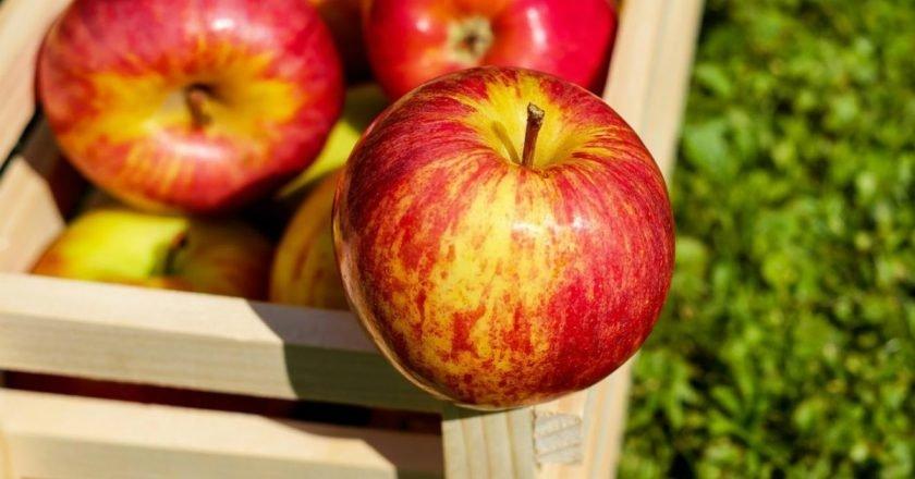 заготовки из яблок