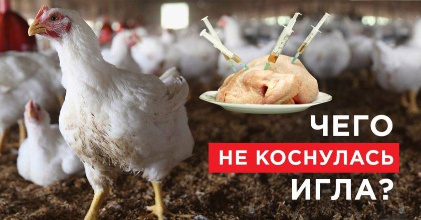 самая полезная часть курицы