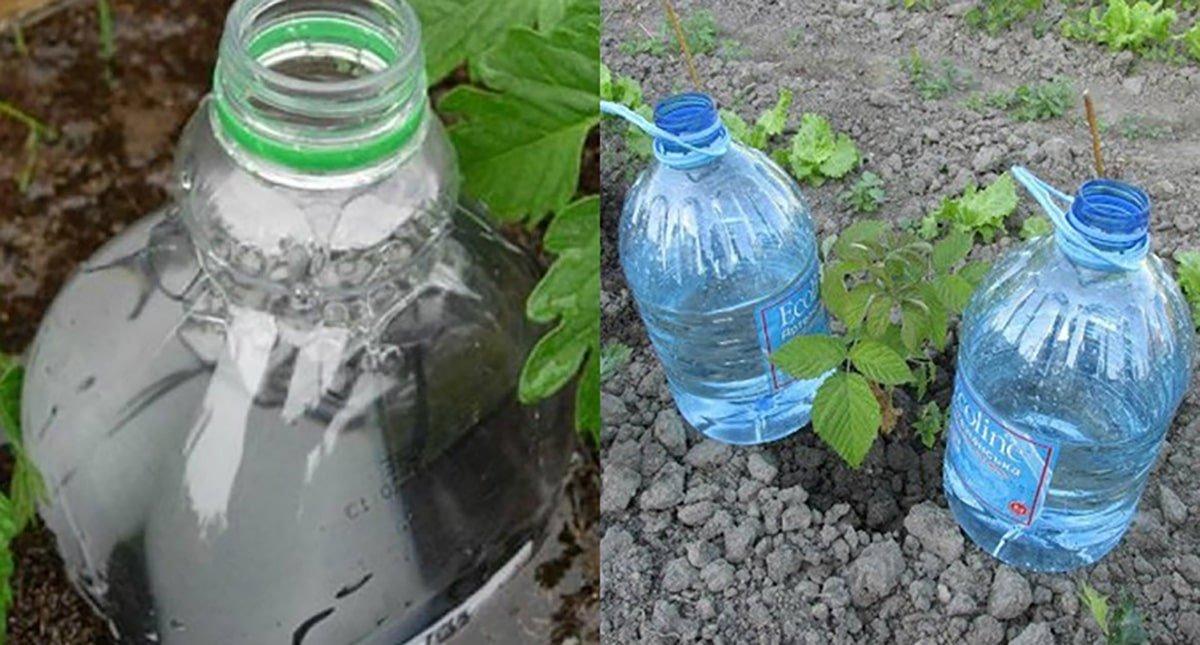 капельный полив растений при помощи бутылки