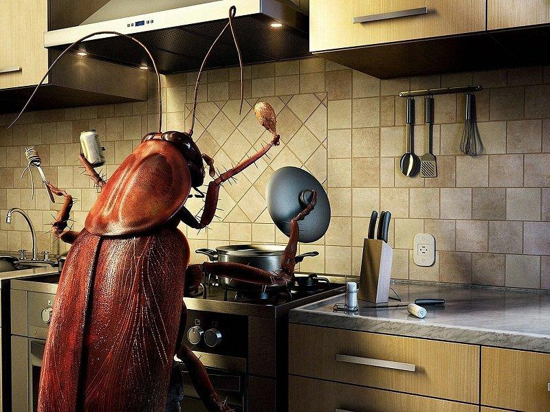 средство от тасекомых на кухне