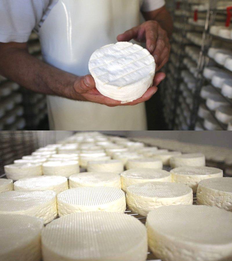 нормандский сыр с белой плесенью