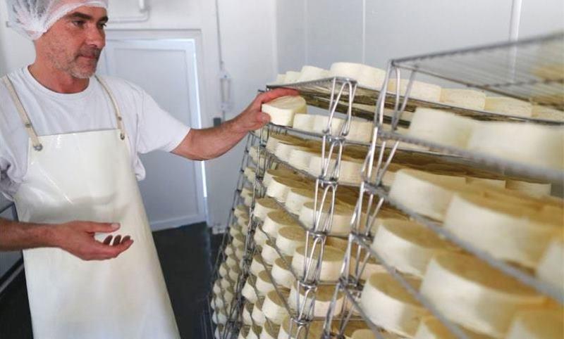 мягкий сыр с плесенью