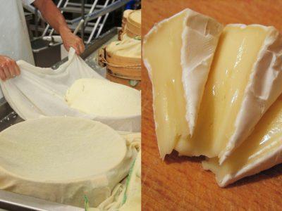 Cыр с белой плесенью