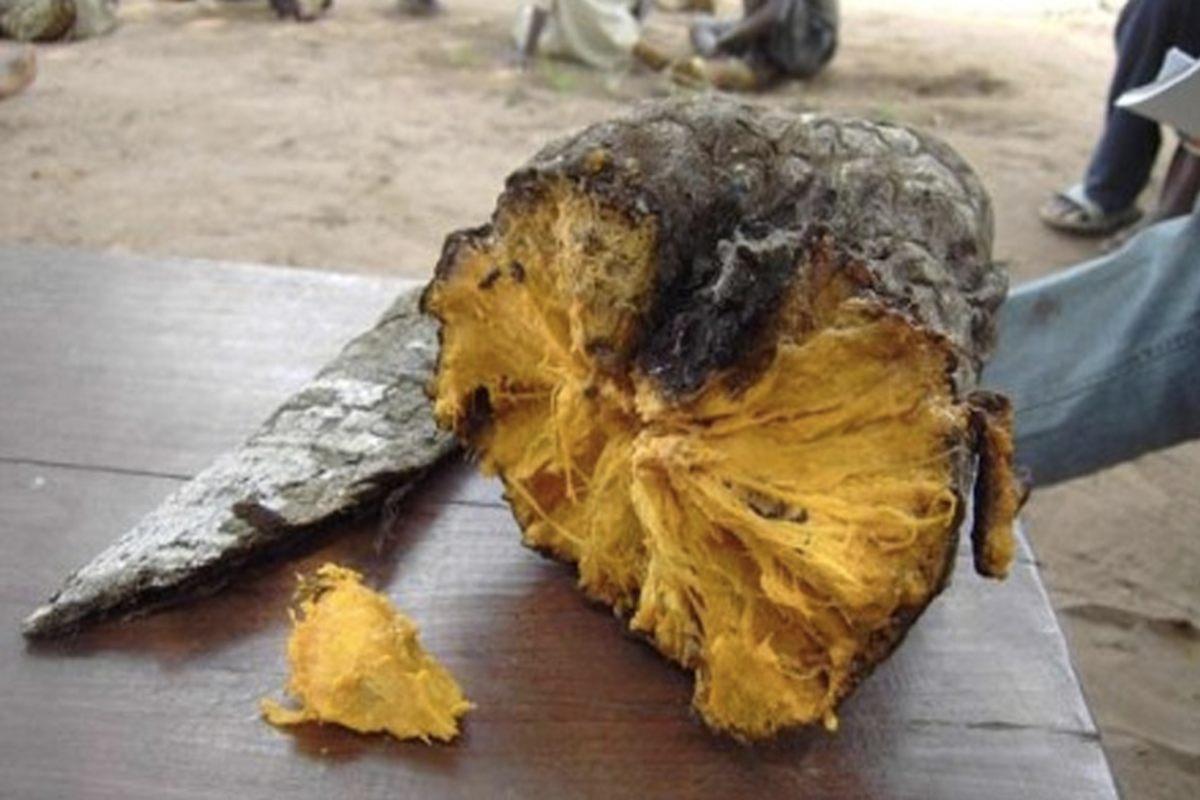 Отвратительные сырые продукты, из которых делают деликатесы