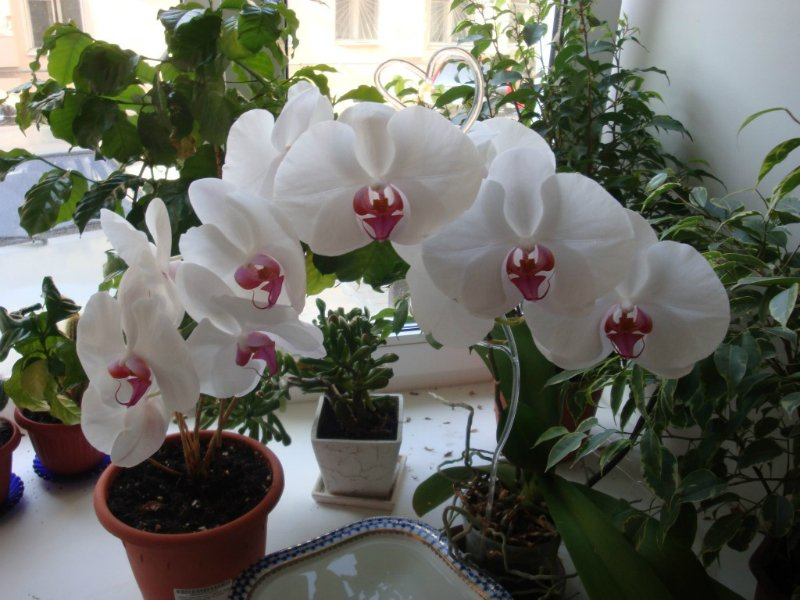 vnútorné kvety