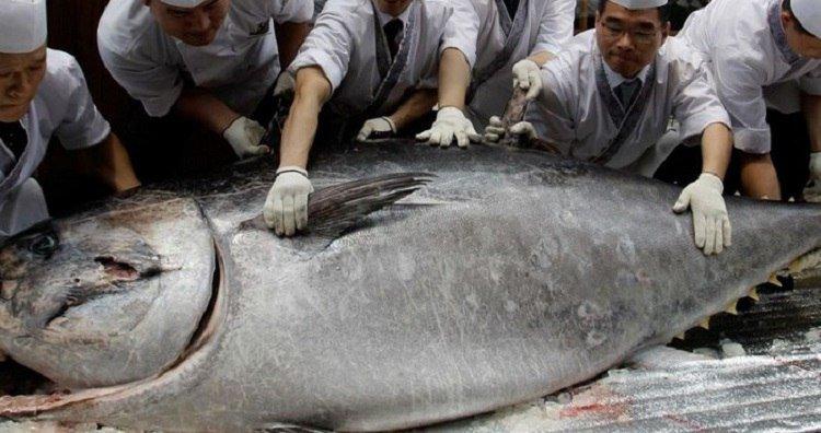 вред тунца