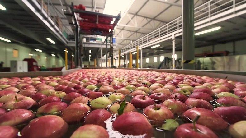 фрукты и здоровье
