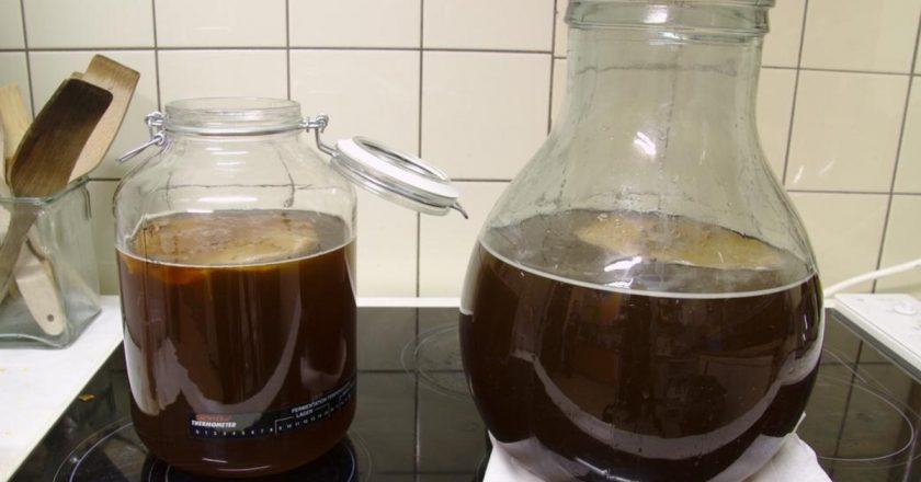Выращивание чайного гриба в домашних условиях