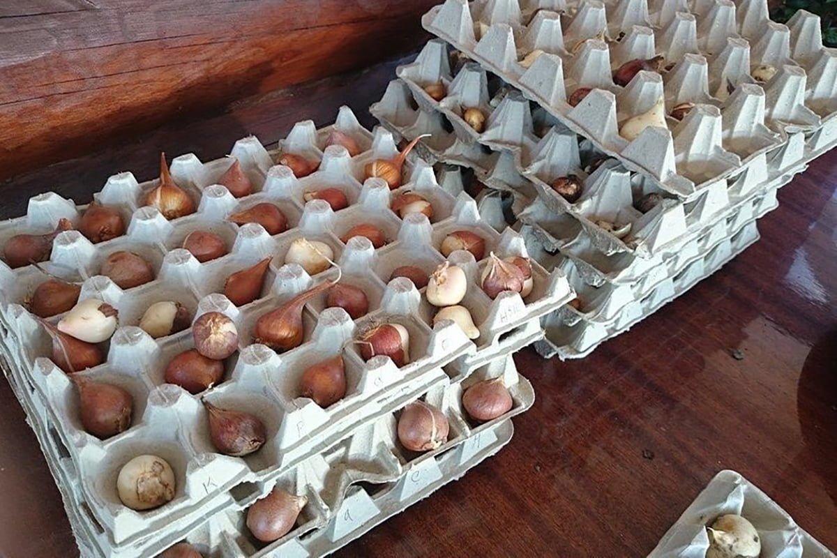 яичный лоток с рассадой