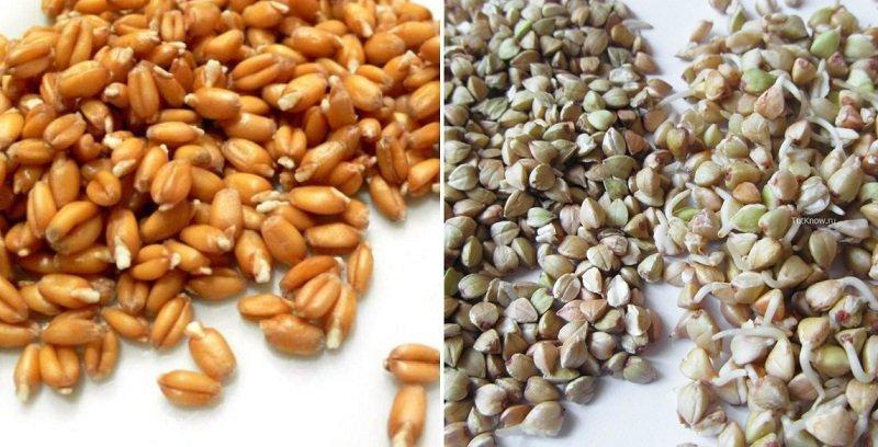 Замачивание круп, «раскрытие» круп и бобовых, пророщенные зерна