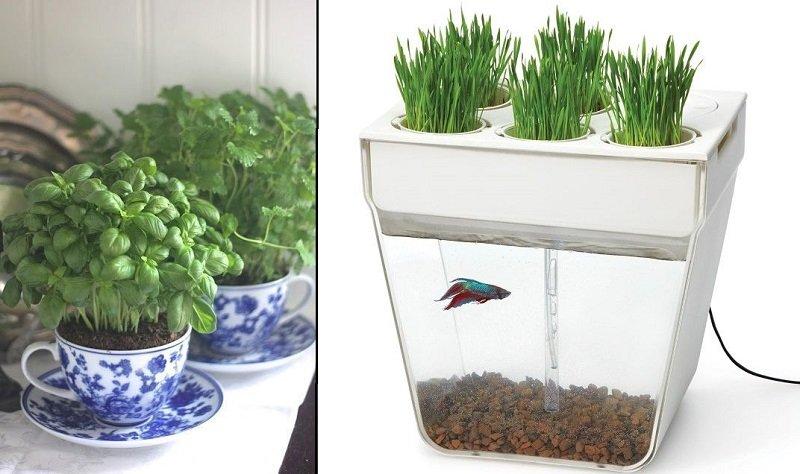 что выращивать на кухне