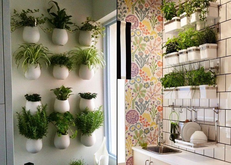 как выращивать на кухне