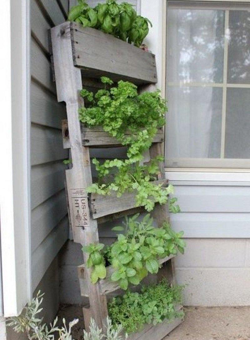 как выращивать зелень