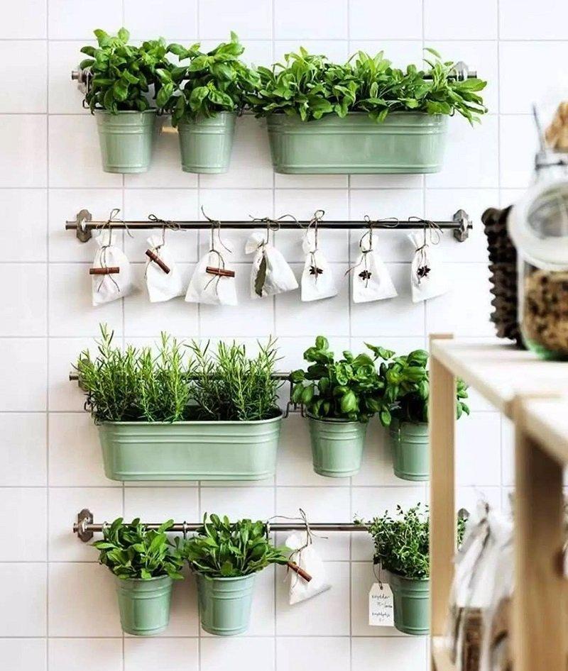 как разместить растения