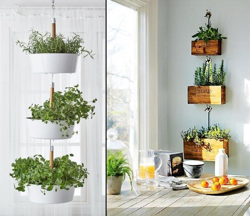 Как выращивать сад на кухне