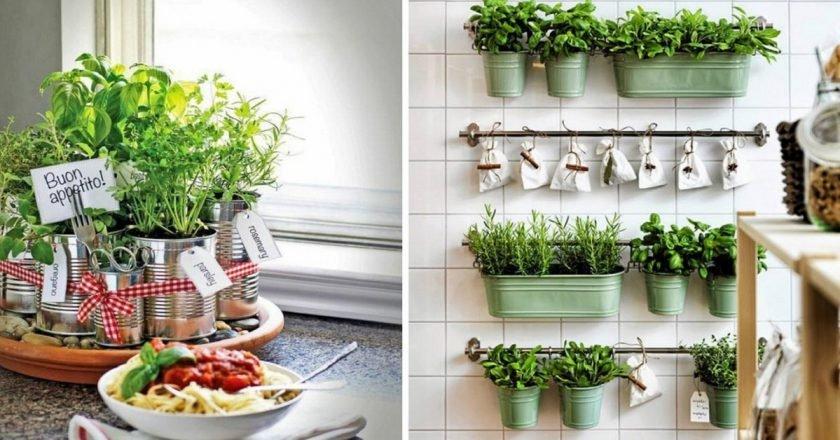 как разместить зелень на кухне