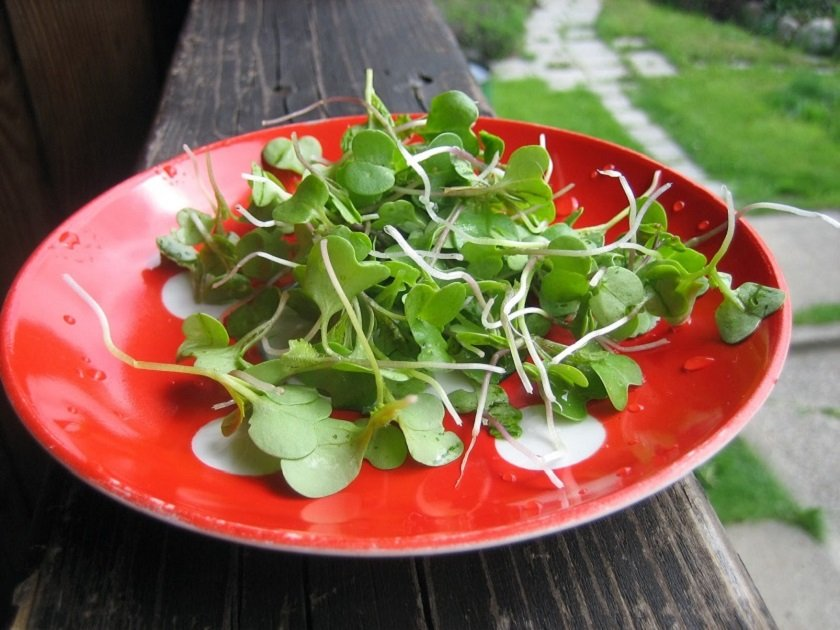 особенности биогенной еды