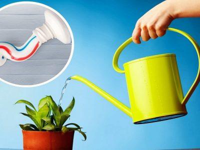 Зубная паста для подкормки растений