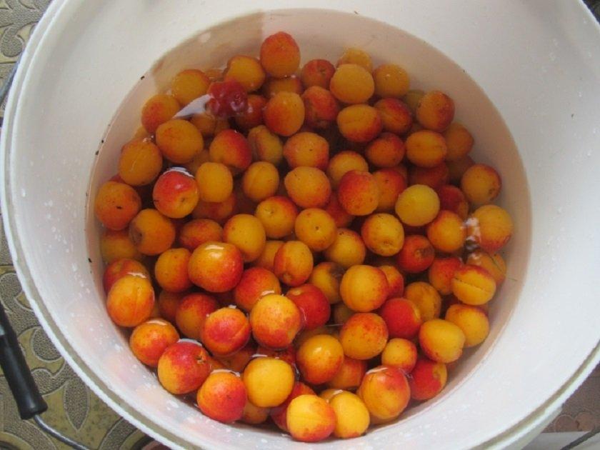 помыть абрикосы
