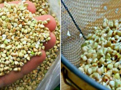 Хумус из зеленой гречки