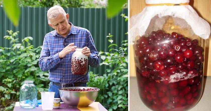 Как приготовить вишневку